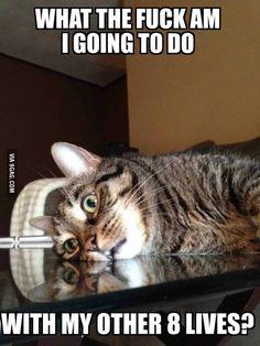 Existential Crisis Cat.