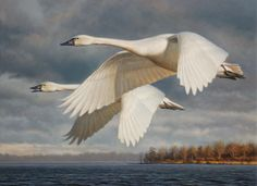 Tundra Swans by George Lockwood. Another artist I admire.