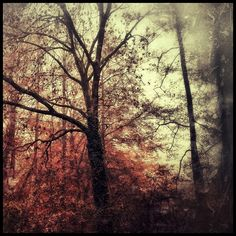 el otoño, hojas, árboles, octubre