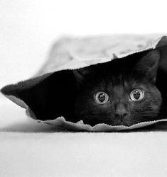"""""""It's easier to let the cat out of the bag than to put it back in again."""" --Will Rogers"""