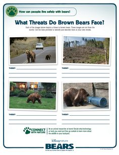 What Threats Do Brown Bears Face?