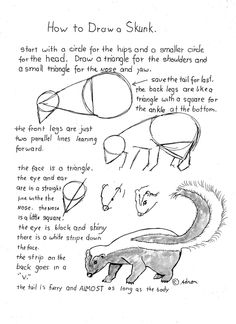 How To Draw A Skunk Worksheet, You can read the lesson at the blog.http://drawinglessonsfortheyoungartist.blogspot.com/2013/01/how-to-draw-skunk-worksheet.html#