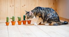Cactus & Cat