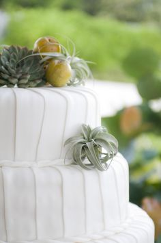 Wedding Cake with Air Plants - Kind of Unique! On SMP: http://www.StyleMePretty.com/2013/08/20/punta-cana-wedding-from-angie-silvy-photography/ Angie Silvy Photography