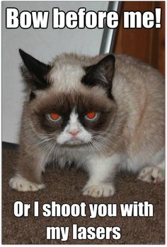 #grumpycat #grumpy #tard #cats #kittens #animals #pets #funny #cute