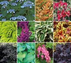 Cool Lights 31 plants for shade border 24ft x 8ft