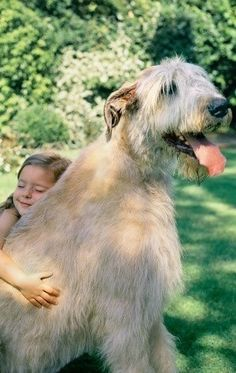 Irish wolfhound! My family & i will be safe with this puppy