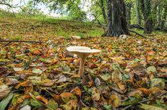 Woodland Mushroom... by TRM-photography.co.uk, via Flickr