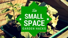 Six Small-Space Gard