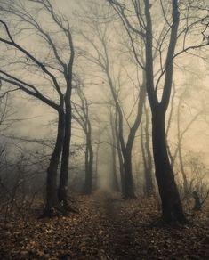The Wild Woods.