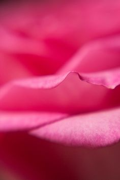 Color Fucsia - Fuchsia!!! petals