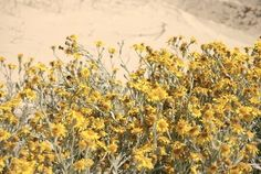 Yellow Like the Sun by Bianca Green