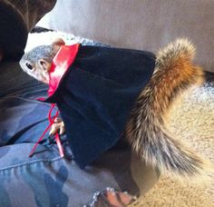 My baby squirrel, Peanut. All dressed for Halloween