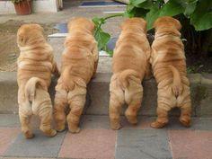 Puppies and Pets on Pinterest | 316 Photos on shar pei, pomeranians a ...