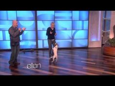 Uggie the Dog (from The Artist) does tricks for Ellen. I NEED THIS DOG.