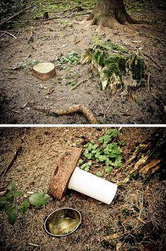 Stump cache