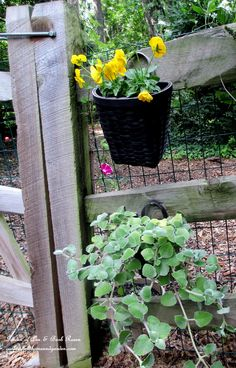 Quick & easy DIY flower baskets for a pop of color in the garden. Click on the picture for more pictures and directions (Garden of Len & Barb Rosen)