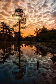 Arkansas Cypress by Tim Ernst