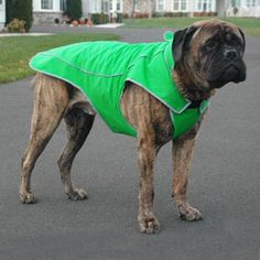 Precision Fit Dog Parka - Why not do this for a mini donkey?