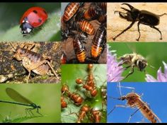 15 Amazing Facts About Insects - YouTube