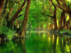 beautiful cypress trees