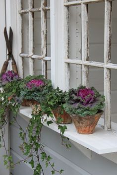 Alternative to Window Box - Ledge with potted plants. Do this on Nature Window. . . . add rusty something in the corner, terra cotta pots with ornamental cabbage and ivy - charming!