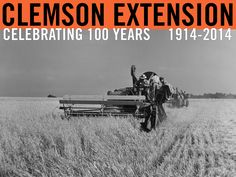 Harvesting oats. Undated. Image courtesy of Clemson University Special Collections. #ClemsonExt100