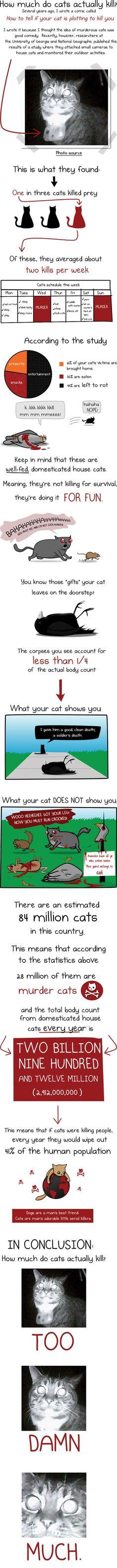 cats kill!