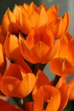 ... #orange