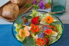 Edible Flowers: 42 Varieties to Add to Your Garden