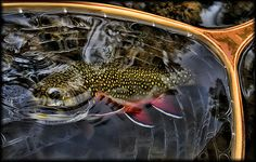 Brodin Brookie by Fly to Water, via Flickr