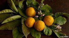 The return of heritage fruit and veg varieties