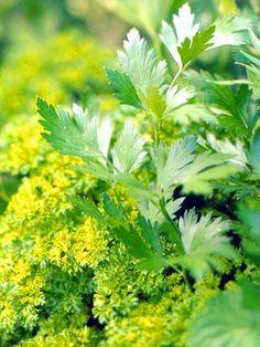 Best Green-Leaf Plants for Your Garden