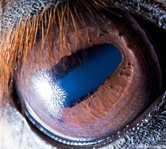 Horses 'Talk' To Each Other With Their Ears & Eyes, Study Shows