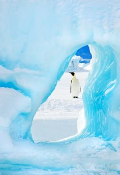 I JUST WANT TO GO TO ANTARTICA !!!