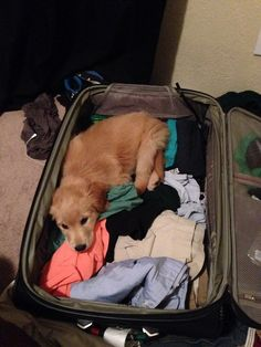 Pack me too! I want to go with you! So precious #puppylove #cutedogs #travel www.facebook.com/SallingTateDDS