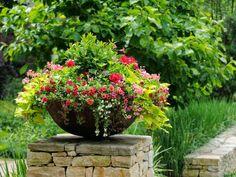 blogger pixz, garden repin, container gardening