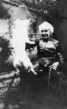 Old lady, jumping dog and bird.