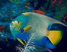 flora y fauna de cuba imagenes - Google Search
