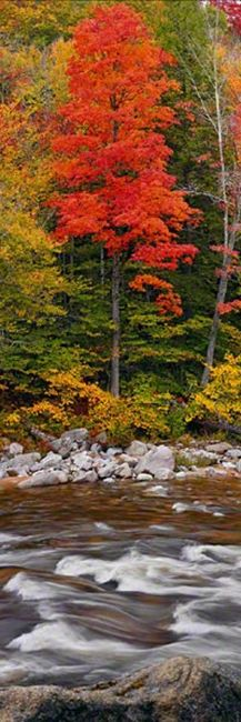 Monarch - White Mountain National Forest, New Hampshire. © 2013 Peter Lik Fine Art Photography