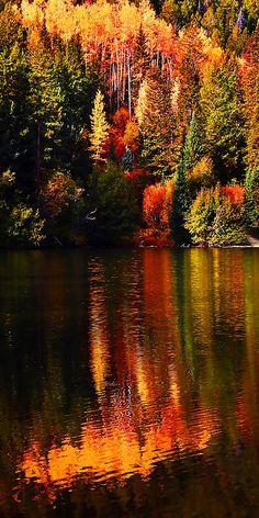 Cottonwood Lake. Buena Vista