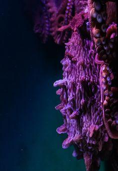 Octopus by Lance Rogers - via flowerling: