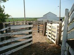 The lane for unloading and loading cattle. The loading chute is on the right.