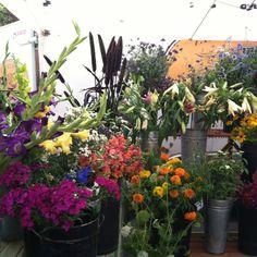 Beautiful Aspen wildflowers at the Saturday market