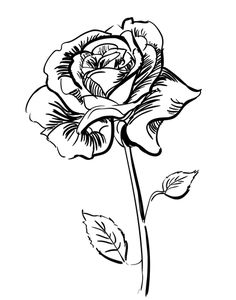 drawing beautiful roses | How to draw a rose step by step | Art All