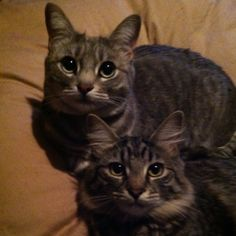 These are not my cats... but their twins.  :)
