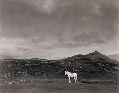 white horse, south uist, scotland   foto: paul strand