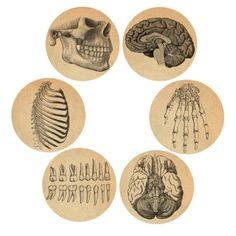 "Button Diva - Anatomy Bones and Brains 1"" Pinback Buttons"