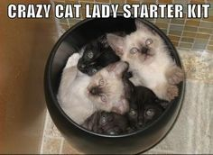 cat lady hahah