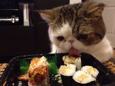 I like Sushi.  Cutest thing ever a cat that likes sushi